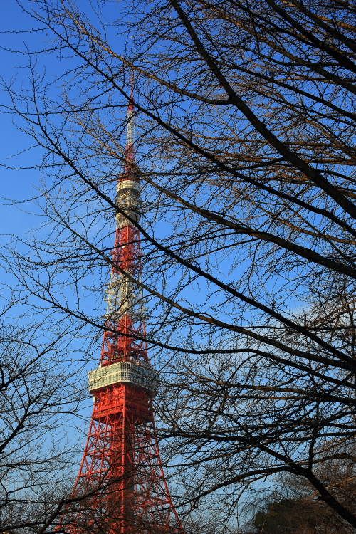 2016_01_31 tokyo tower-0049